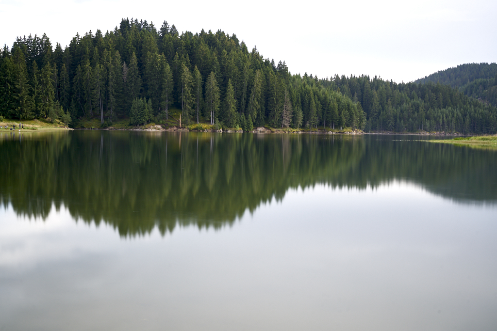 Green pine trees and their reflections on the waters of Dospat Reservoir, Bulgaria